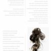 Scribbles by Hazem Tagiuri